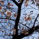 春がくるよー